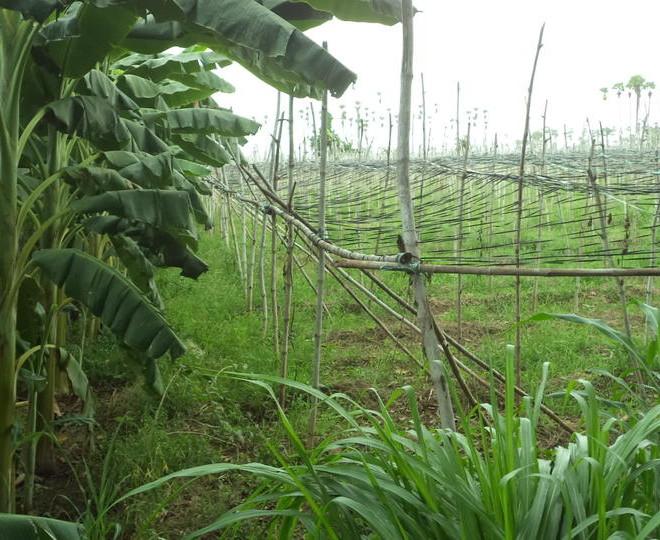 Agricultural Land in Rajahmundry