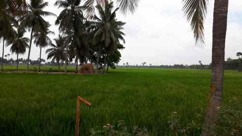 Agricultural Farm Land in Rajahmundry