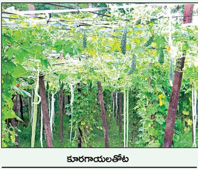 Nutritional groves schools at Rajahmundry