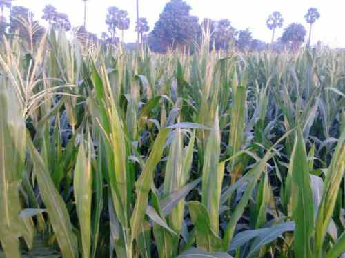 Agriculture land at For Sale at Eluru