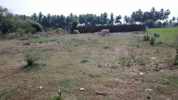 Agricultural Land For Sale In Palakollu