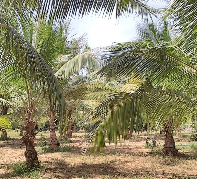 Agricultural land at RajahmundryRealEstate