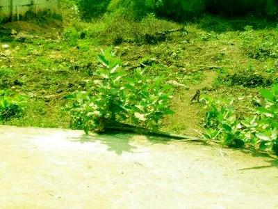 Land in Konthamuru