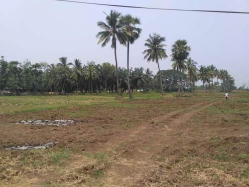 Agricultural Land For Sale In Pitapuram