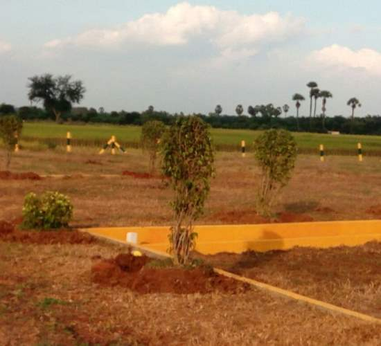 Residential Plots For Sale In Kolamuru