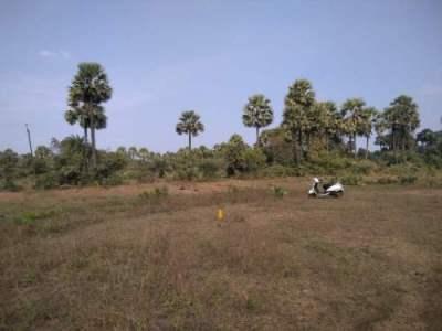 Residential Land For Sale In Kolamuru