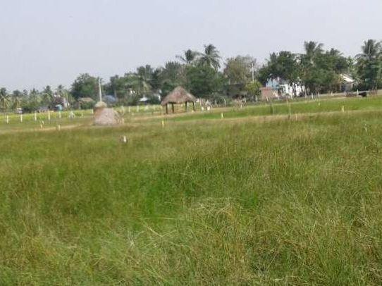 Residential Land For Sale In Torredu